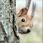 Squirrel Proofing Advice For Your Garden
