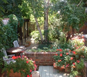 Bedford Park backyard