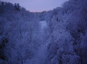 Cedarvale Ravine in Winter