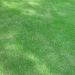 Improve Your Toronto Lawn