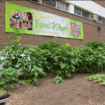 Food Share Is Holding It's Annual Food Party in Toronto